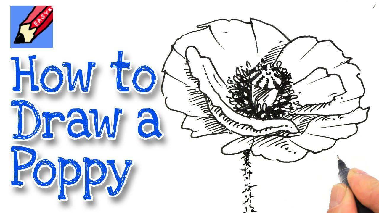 Drawn poppy real flower How Poppy YouTube a draw