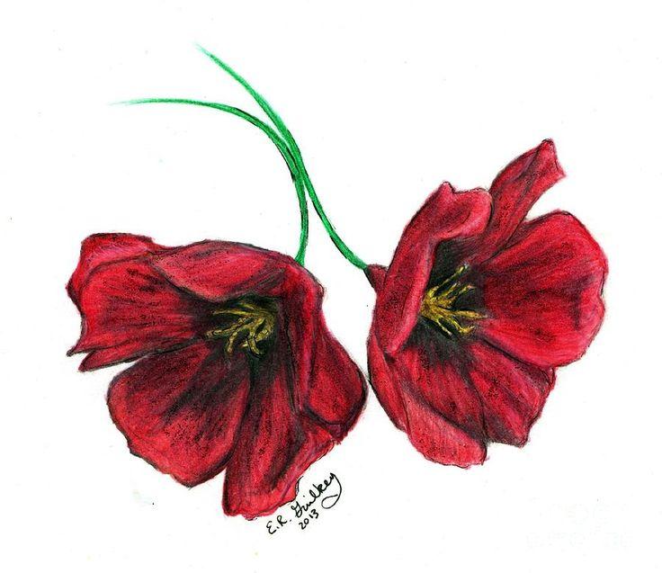 Drawn poppy realistic FIELDS WHERE DrawingPoppiesRobert  images