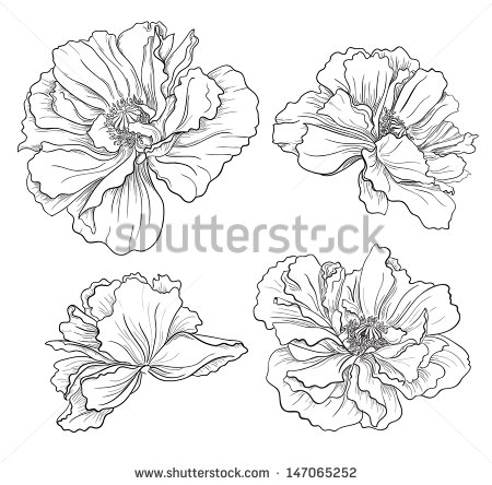 Drawn poppy realistic Collection  poppies scientific tattoo