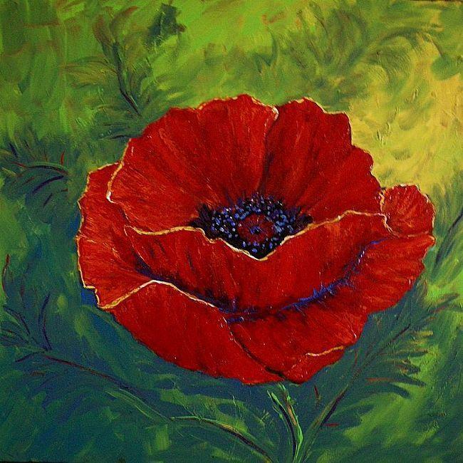 Drawn poppy red poppy By