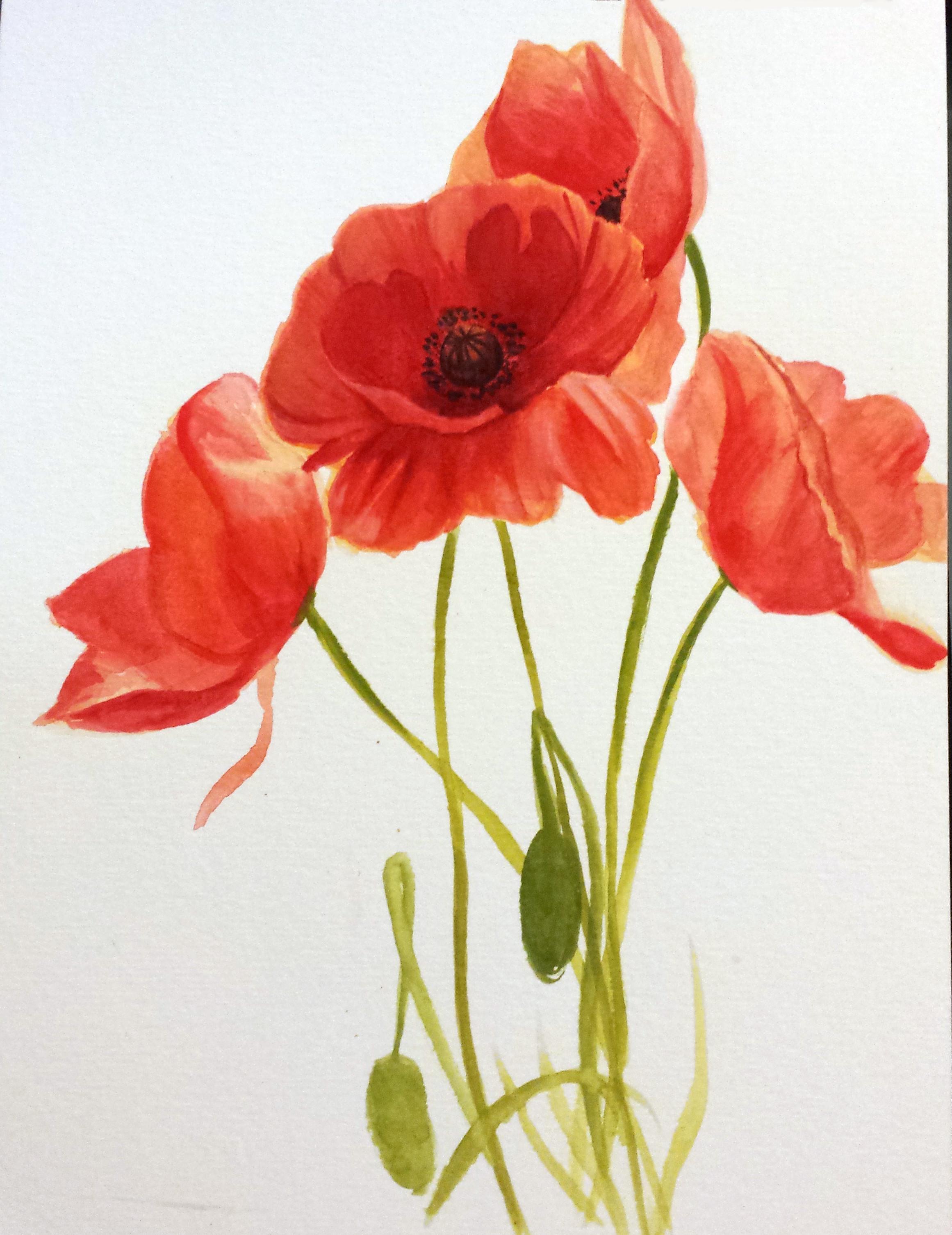 Drawn poppy red poppy Week April SketchDaily Flower Poppy