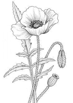Drawn poppy simple Poppy Pinterest page … poppy