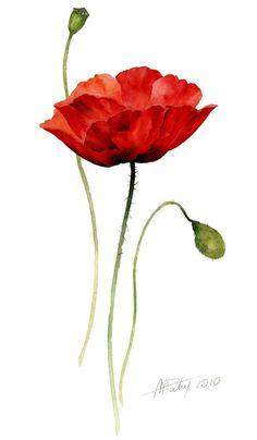 Drawn poppy single Flower Corn open poppy plant