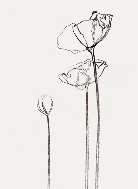 Drawn poppy single Schupfer : Bernadette Walter Schupfer