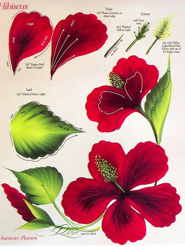 Drawn poppy stroke 32 20+ FLOWERS GUIDES One