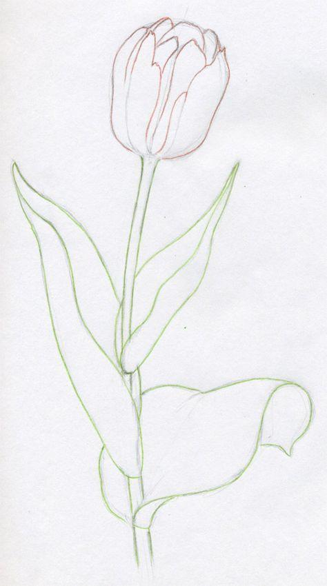 Drawn poppy stroke Flowers Easy In Steps Steps