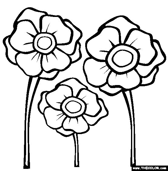 Drawn poppy veterans day Day Poppies picture others Free