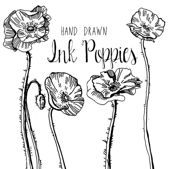 Drawn poppy vintage Drawing Clipart Flower Digital Flowers