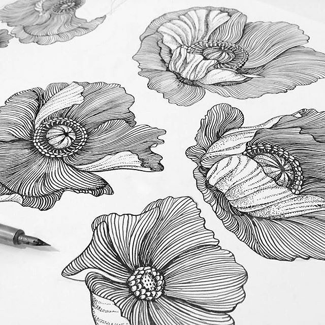 Drawn poppy wall 25+ Poppies to Floral ideas