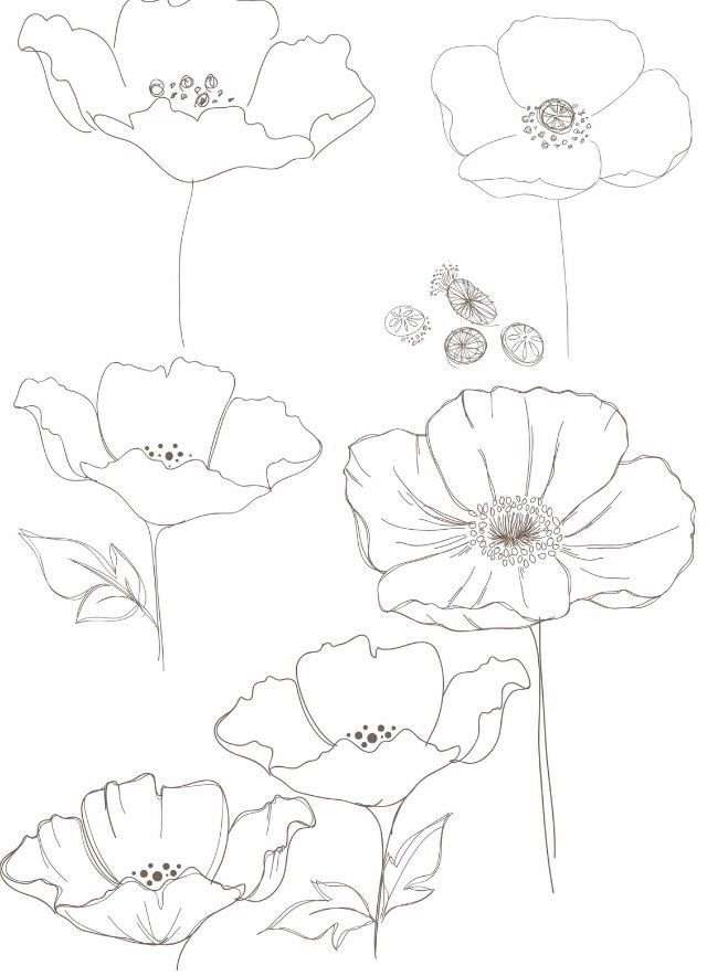 Drawn poppy wall Ideas how Best on How