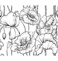 Drawn poppy wall Poppy hepatica Poppy flower the