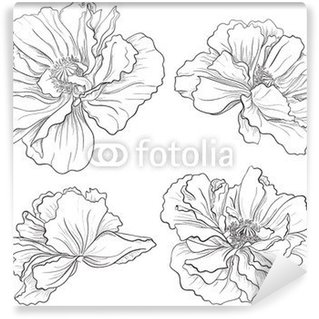 Drawn poppy wall Mural Flower Flower • •