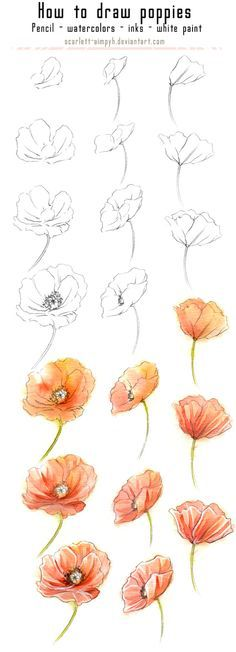 Drawn poppy watercolor More Tutorials draw to Colorful