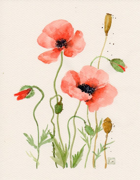 Drawn poppy watercolor Original WATERCOLOR/ACRYLIC Botanical Watercolor best