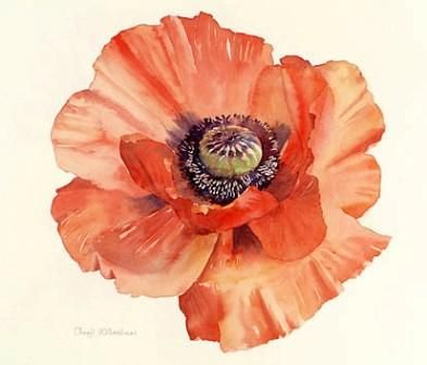Drawn poppy watercolor Poppy tattoo Botanical Botanical beautiful