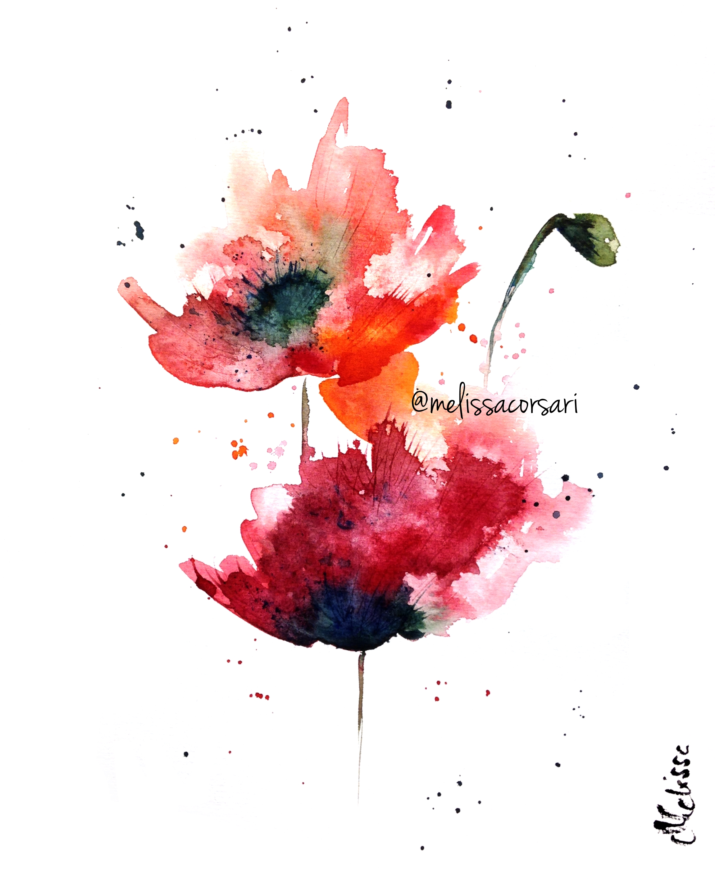 Drawn poppy watercolor  Watercolor poppies poppies Watercolor