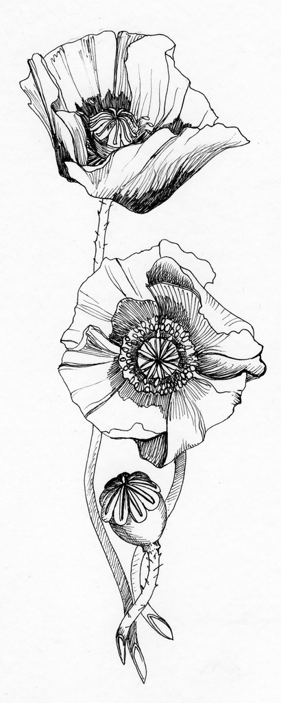 Drawn poppy lisianthus With my represent to roots