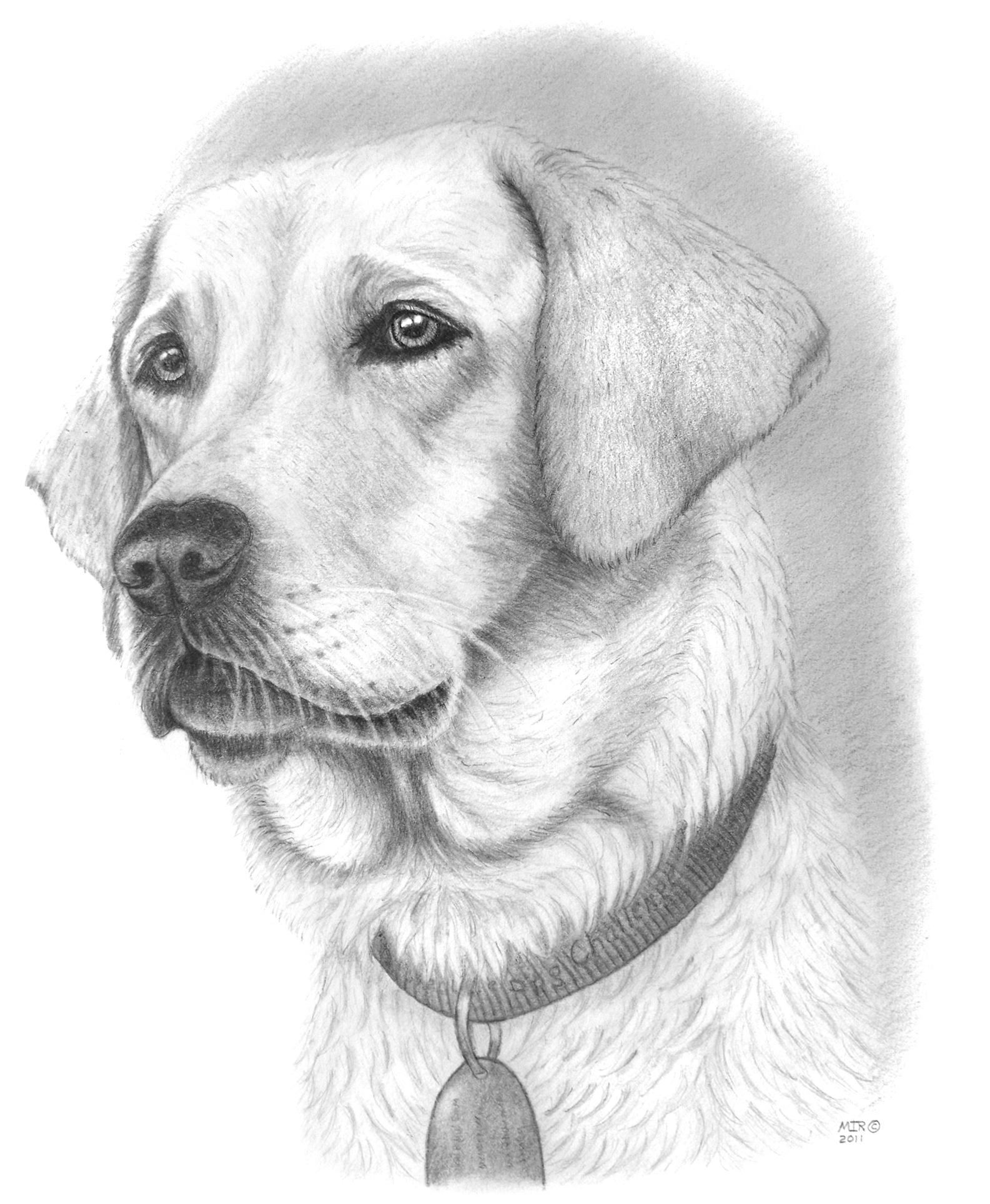 Drawn portrait detailed Dog Art Dog Pinterest Pop