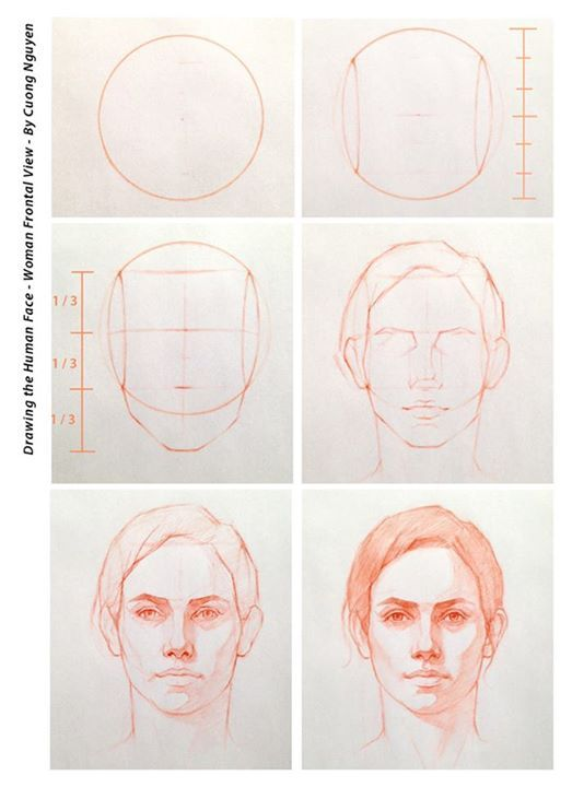 Drawn portrait front view /  on References Pinterest