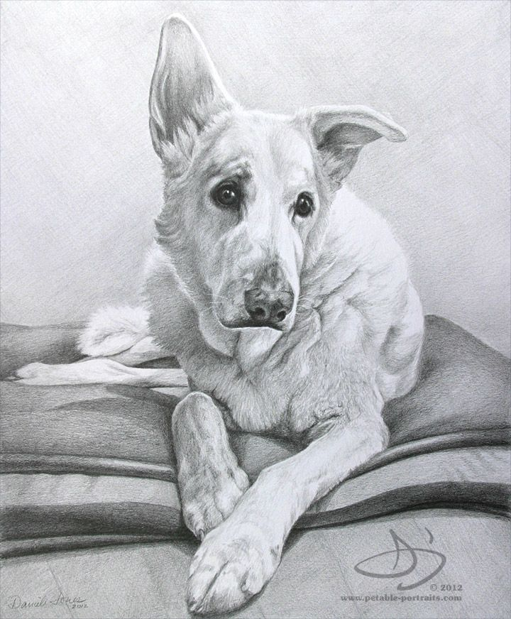 Drawn portrait old english Pinterest best on this Drawing