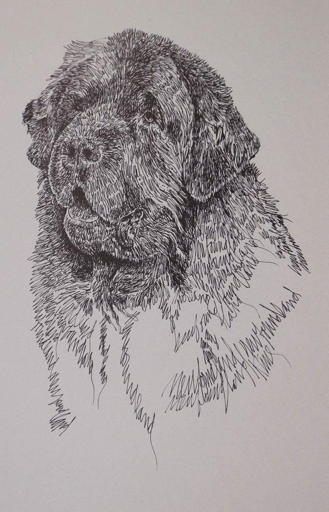 Drawn portrait word Stephen  Newfoundland: Kline Kline