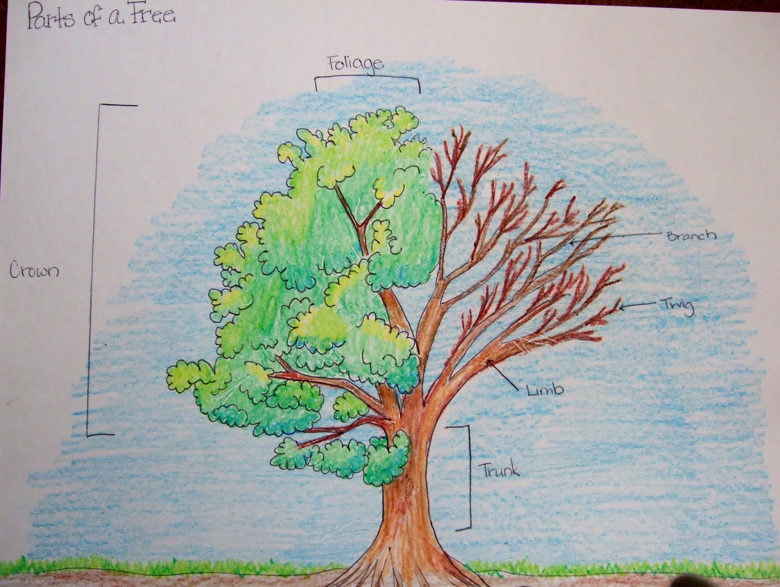 Drawn poster science Parts Of Science The Tree;