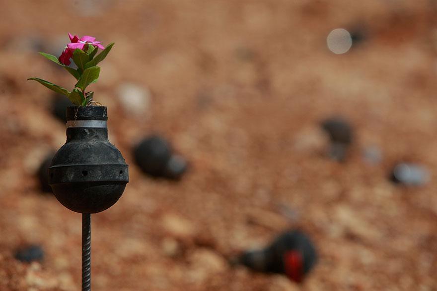 Drawn pot plant army Tear Palestinian 12 Israeli Plants