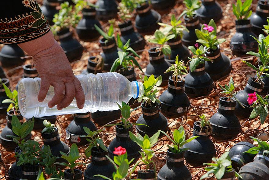 Drawn pot plant army Tear Palestinian 11 Israeli Plants