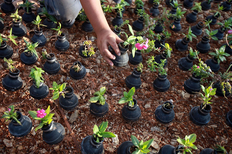 Drawn pot plant army Tear Palestinian 7 Israeli Plants