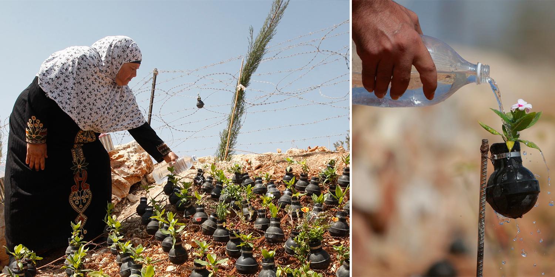 Drawn pot plant army Woman Tear Army Israeli Grenades