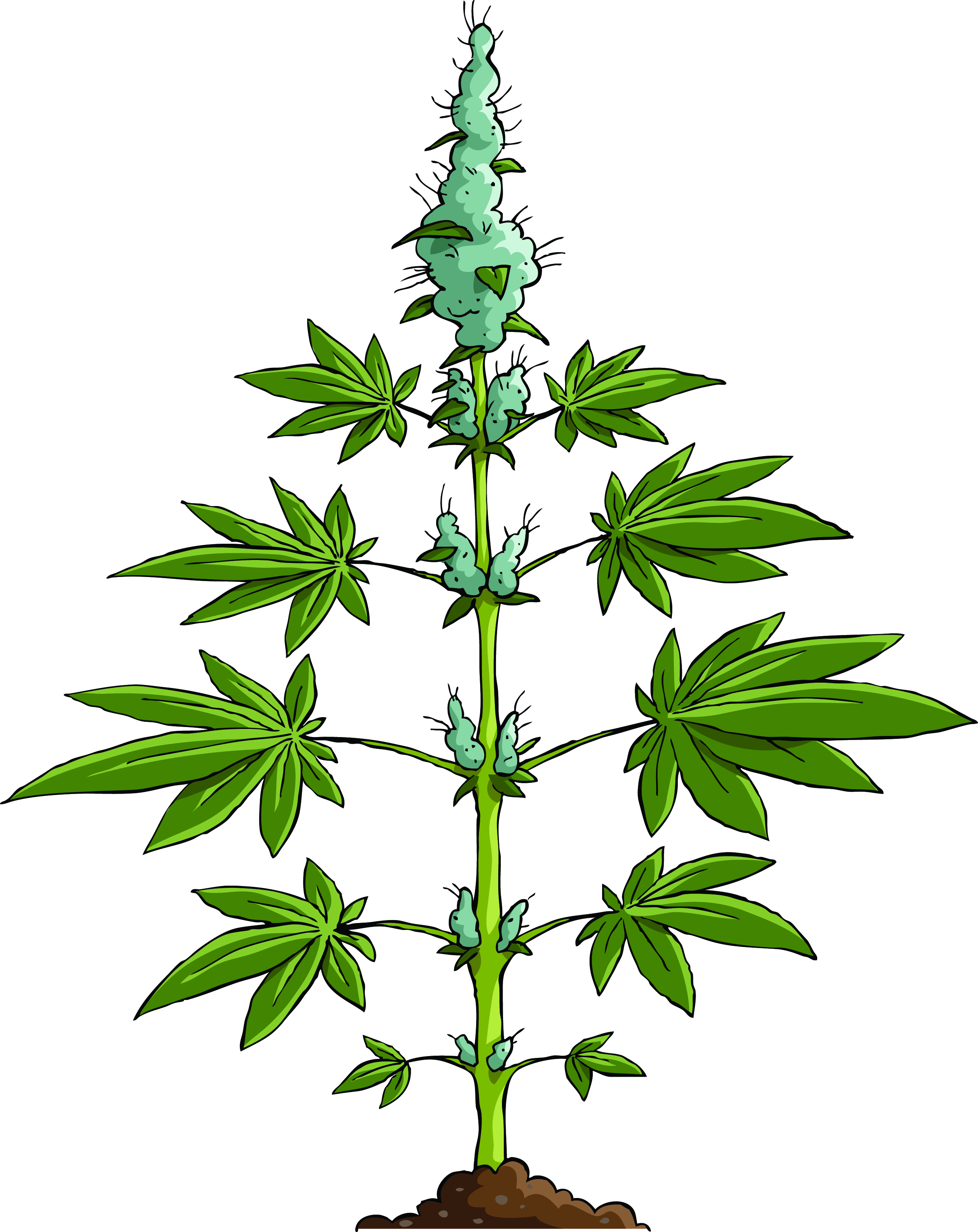 Drawn pot plant cartoon weed Local your to Post The