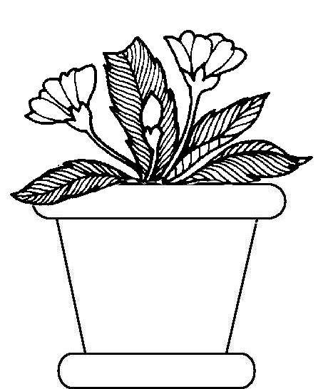 Drawn pot plant coloring page Pages Potted Plants Potted Pages