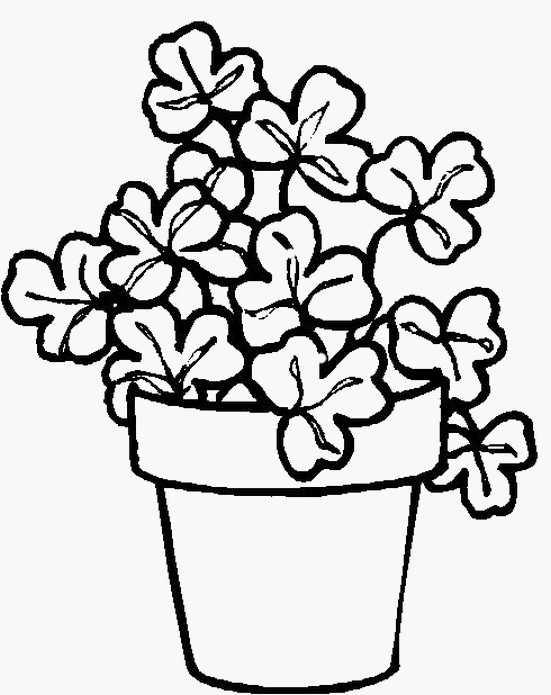 Drawn pot plant coloring page  st coloring To page
