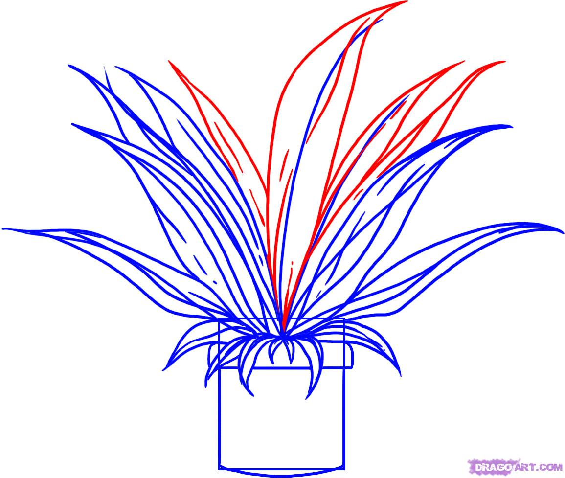Drawn pot plant easy By Step plant a how