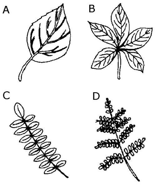 Drawn pot plant five leave Extension 3 Publications State types