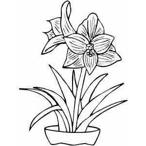 Drawn pot plant flower Download #16 coloring coloring Plant
