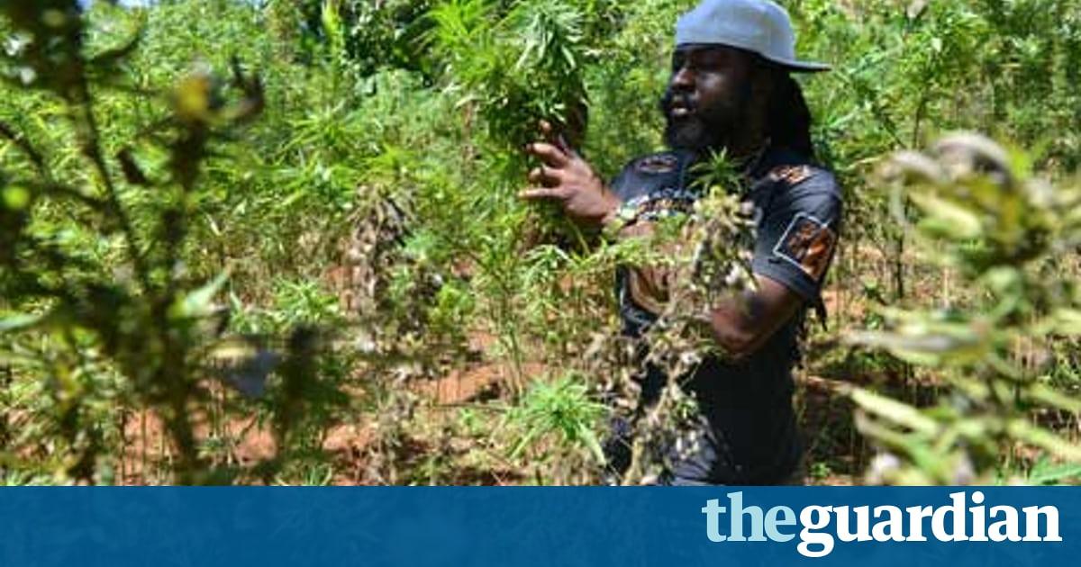 Drawn pot plant jamaican Draw ganja  World tours
