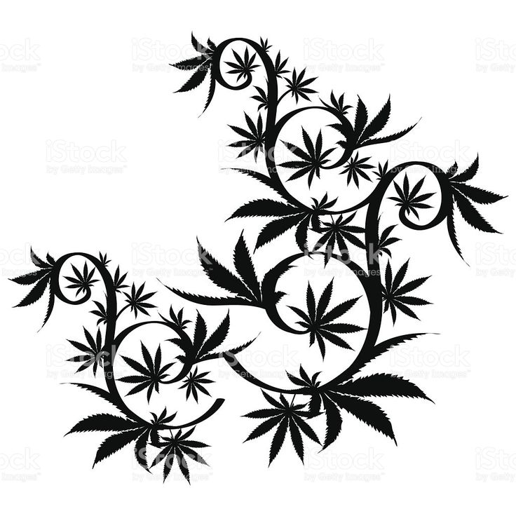 Drawn pot plant leaf silhouette Stock white Vector best leaf