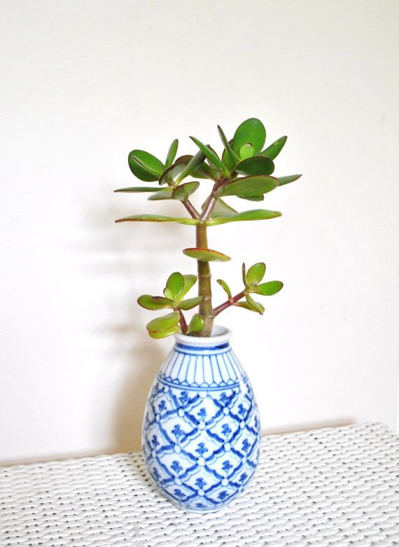 Drawn pot plant money sign White In plant ideas in