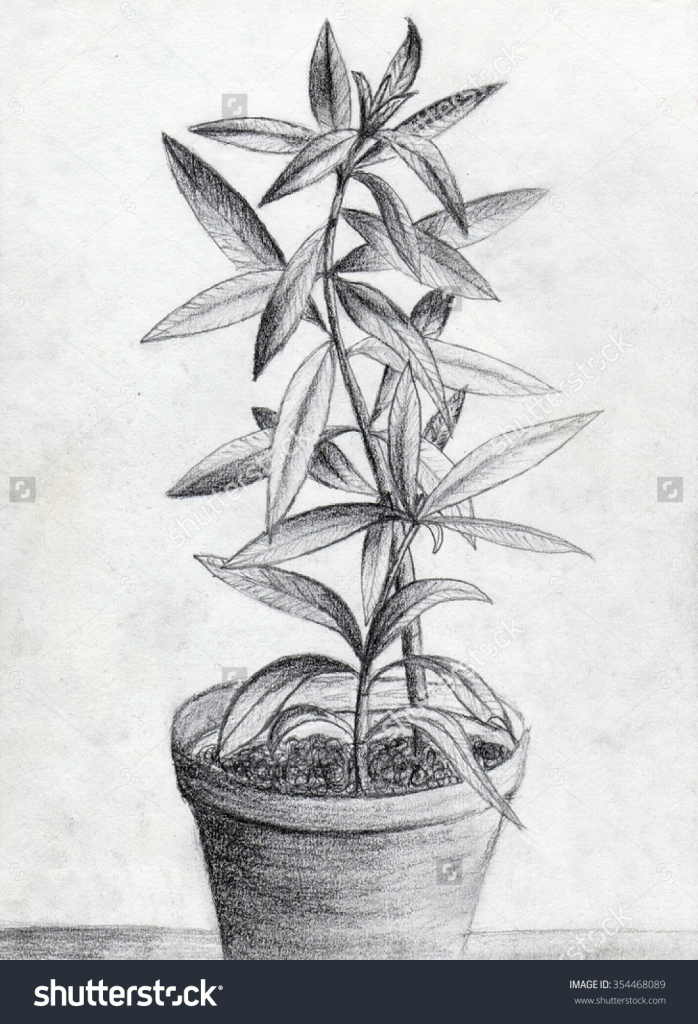 Drawn pot plant pencil drawing Flower Flowerpots Stock Drawing Pic