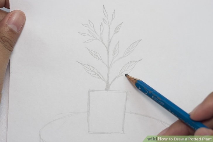 Drawn pot plant pencil drawing Plant: Potted Pictures) Steps Draw