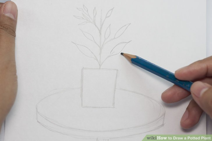 Drawn pot plant Plant wikiHow Step a How