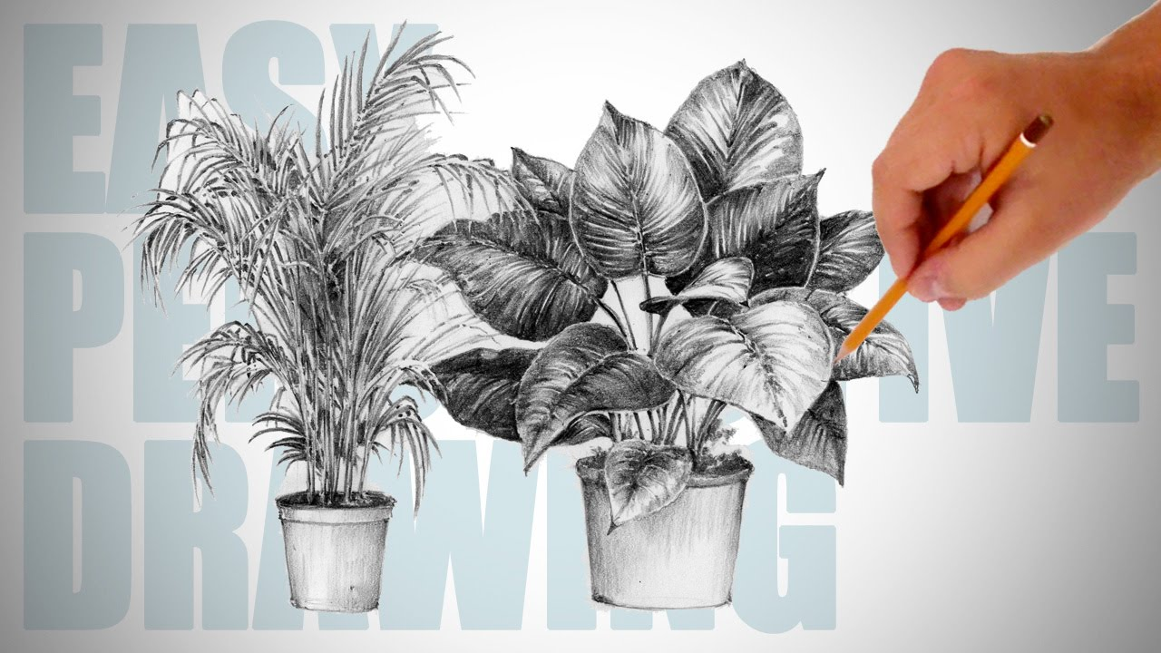 Drawn pot plant pencil drawing To 19 plants Drawing YouTube