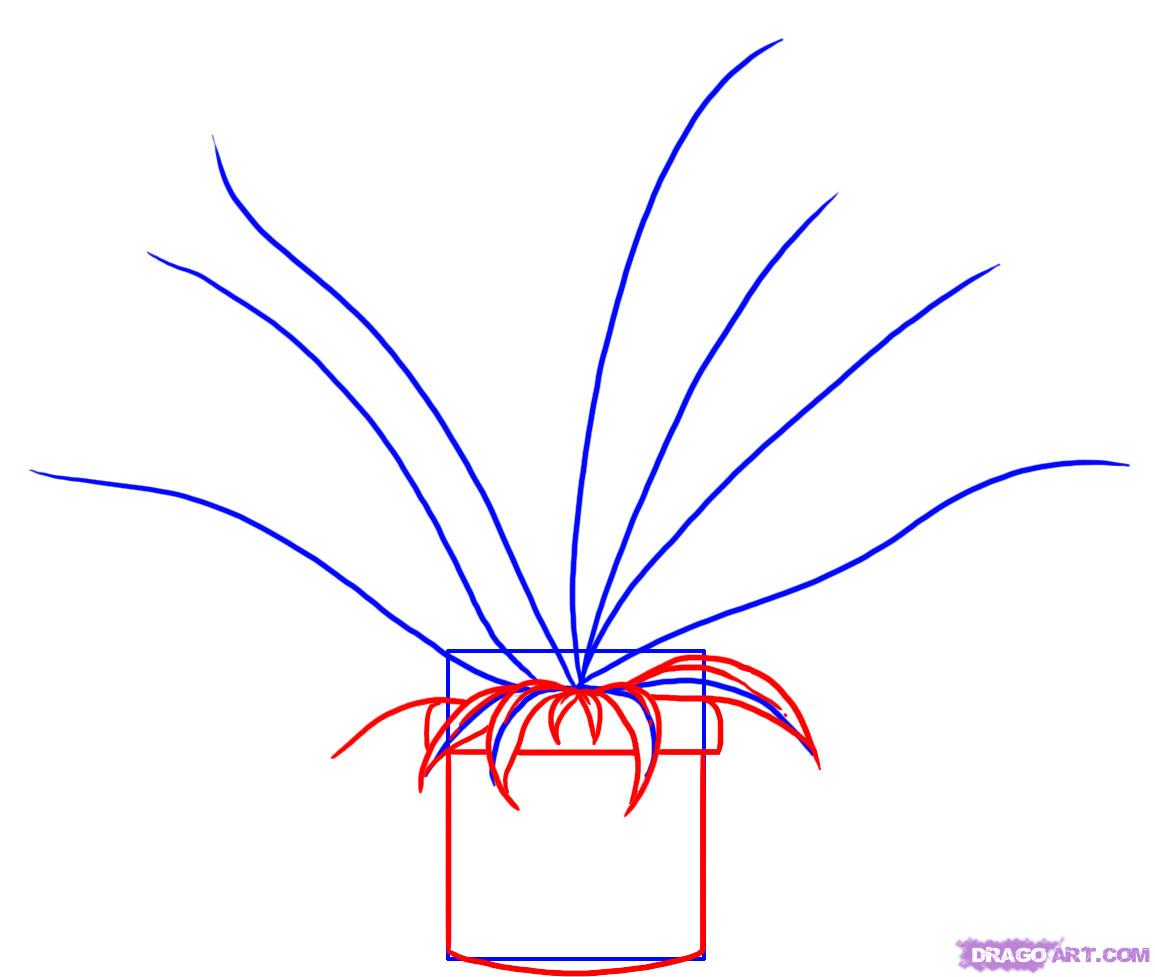 Drawn pot plant real Step  Plant a Step