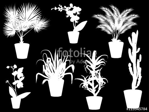 Drawn pot plant seven Of  Stock seven on