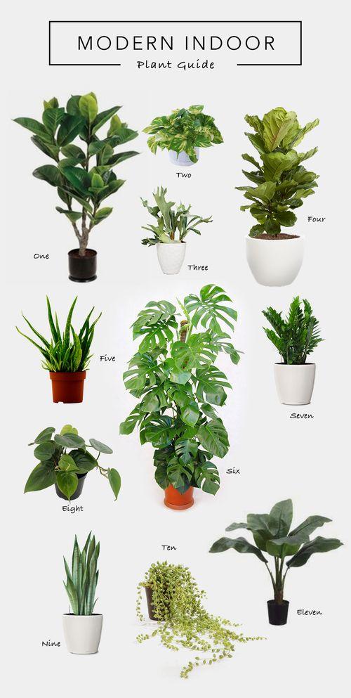 Drawn pot plant seven Home 25+ on Living Plants…