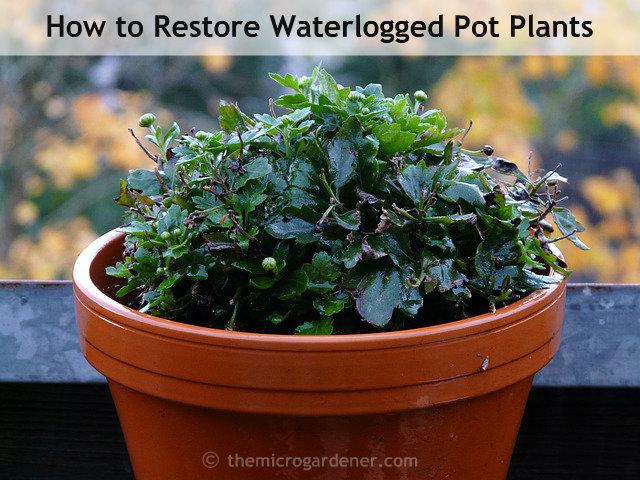 Drawn pot plant sick Gardener are plants solutions Waterlogged