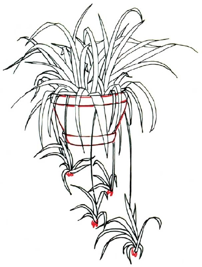 Drawn pot plant sketch 3 a Roots Draw Roots