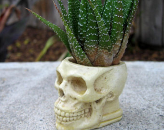 Drawn pot plant skull Bone pot container casting Etsy