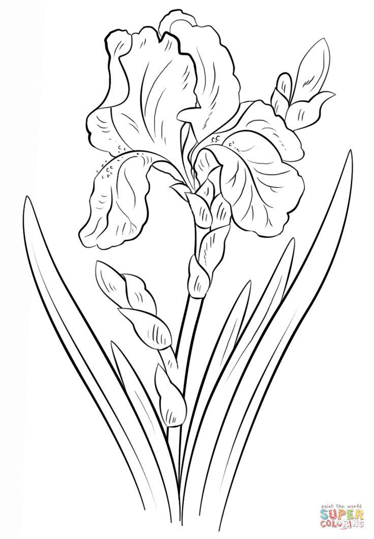 Drawn pot plant traceable Images on Tutorials Рисуем 1038